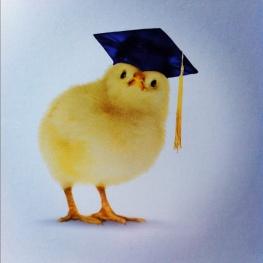 graduating chick